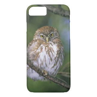 Chile, Aysen. Juvenile Autral Pygmy Owl iPhone 7 Case