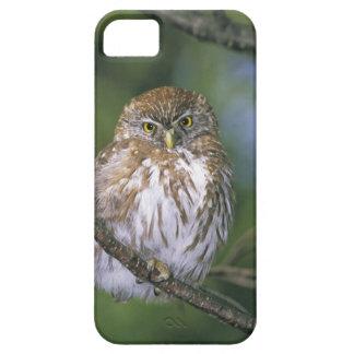 Chile, Aysen. Juvenile Autral Pygmy Owl iPhone SE/5/5s Case