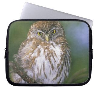 Chile, Aysen. Juvenile Autral Pygmy Owl Laptop Sleeve