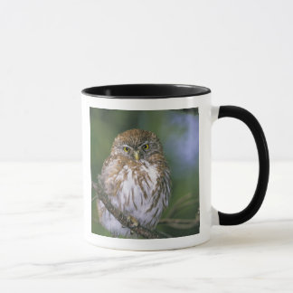 Chile, Aysen. Juvenile Autral Pygmy Owl Mug