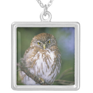 Chile, Aysen. Juvenile Autral Pygmy Owl Silver Plated Necklace