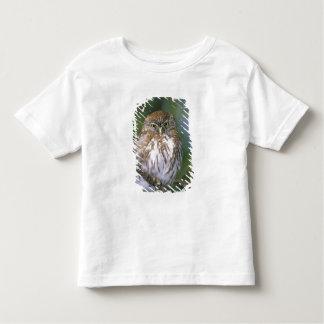 Chile, Aysen. Juvenile Autral Pygmy Owl Toddler T-shirt