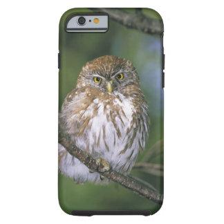 Chile, Aysen. Juvenile Autral Pygmy Owl Tough iPhone 6 Case