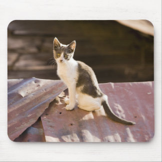 Chile, Valparaiso. Cat on a roof Mouse Pad