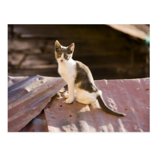 Chile, Valparaiso. Cat on a roof Postcard