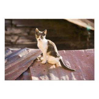 Chile Valparaiso Gato en un tejado Arte Fotográfico