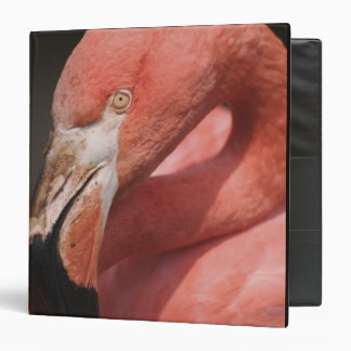 Chilean Flamingo, Phoenicopterus chilensis 3 Ring Binder
