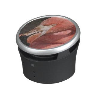 Chilean Flamingo, Phoenicopterus chilensis Speaker