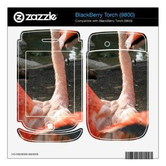 Chilean Flamingo Skin For BlackBerry Torch