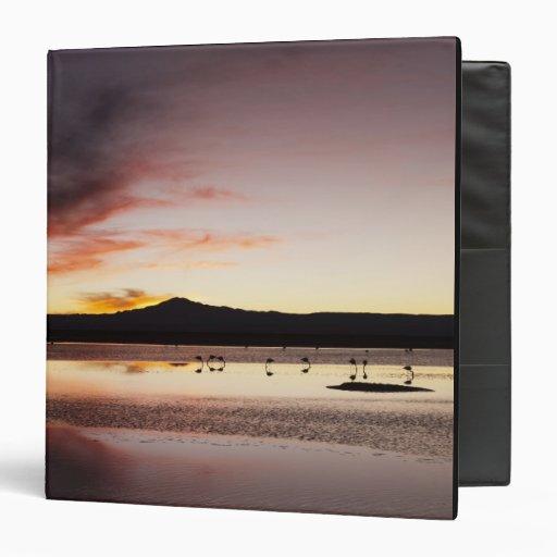Chilean Flamingo Vinyl Binders