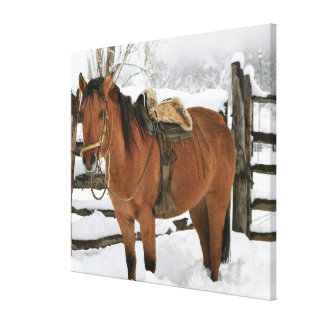 Chilean horse outfitted with traditional Chilean Canvas Print