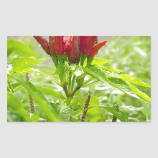 Chili flower rectangular sticker