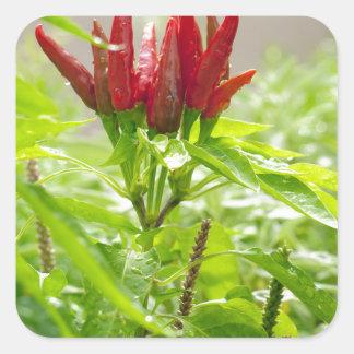 Chili flower square sticker