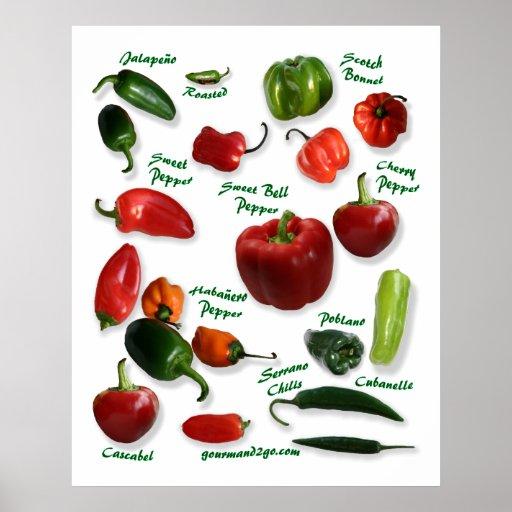 Chili pepper varieties poster zazzle - Best romanian pepper cultivars ...