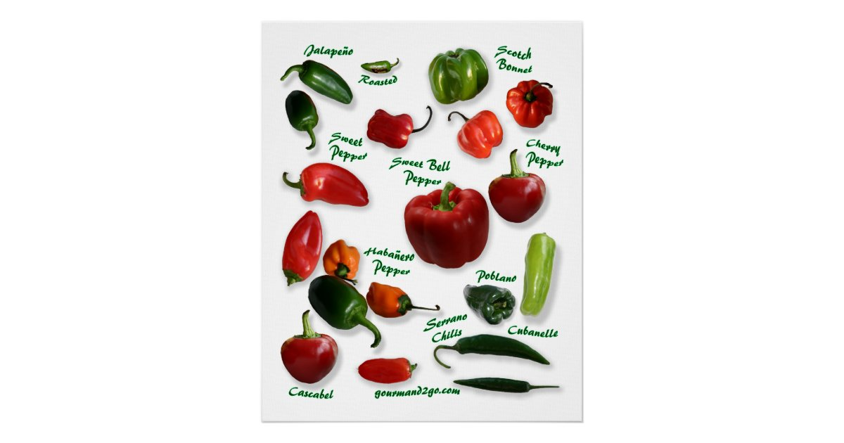 Chili Pepper Varieties Poster Zazzle Com