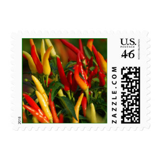 Chili Peppers Stamp