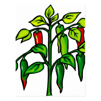 Chili Plant Many Peppers Graphic Postcard