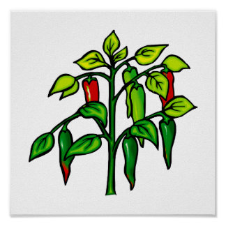 Chili Plant Many Peppers Graphic Poster