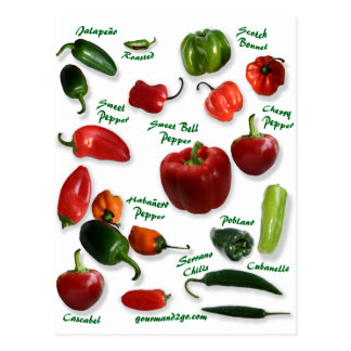 Chili Varieties Postcard