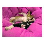 Chill Bill - Relax Max - Cute cats Postcard