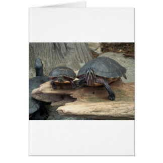 Chillaxing Turtles Cards