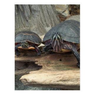 Chillaxing Turtles Postcard