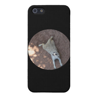Chilled Meerkat iPhone 5 Cover