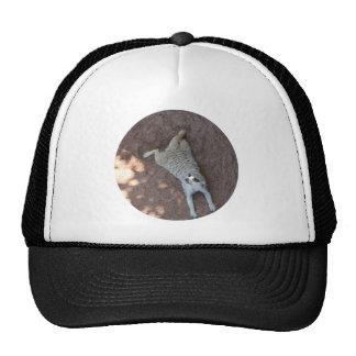 Chilled Meerkat Trucker Hat