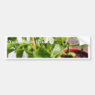Chilli Plants Green Car Bumper Sticker