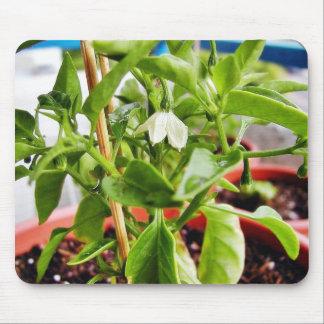 Chilli Plants Green Mousepads