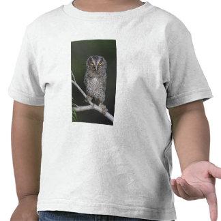 Chillido-Búho del este, asio de Megascops, Otus 2 Camisetas