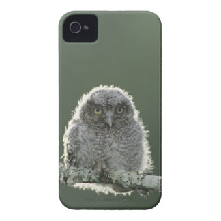 Chillido-Búho del este, asio de Megascops, Otus 3 Case-Mate iPhone 4 Cobertura