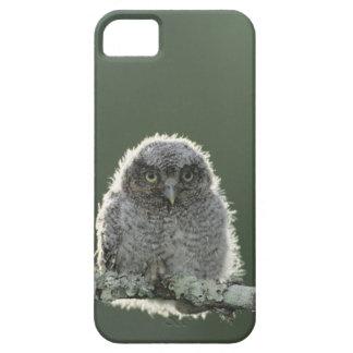 Chillido-Búho del este asio de Megascops Otus 3 iPhone 5 Carcasa