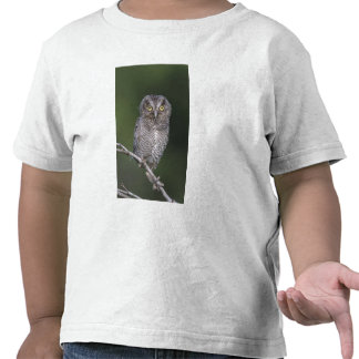 Chillido-Búho del este, asio de Megascops, Otus Camiseta