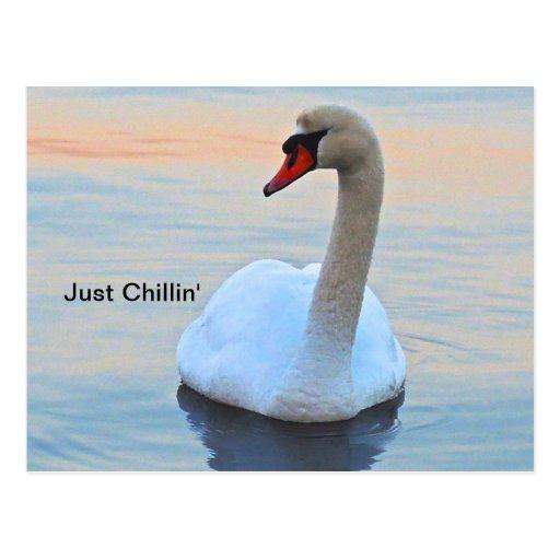 Chillin Postal