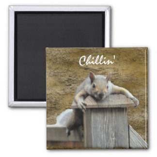 Chillin' Squirrel Relaxing Critter Fun Magnet