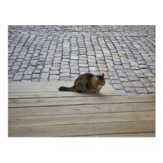 Chilling Cat Postcard