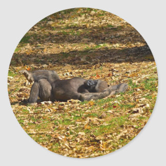 Chilling out at Zoo Atlanta Classic Round Sticker