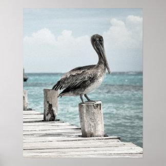 CHILLING (pelican design) ~ Poster