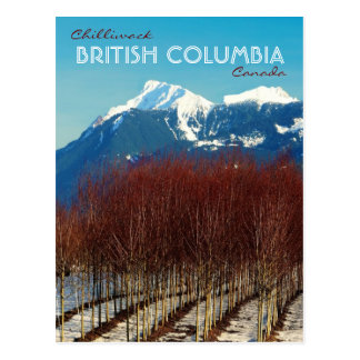Chilliwack BC Tree Nursery and Snowy Mountain Tops Post Card