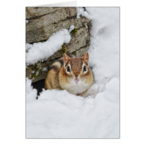 Chilly Little Chipmunk in the Snow