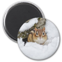 Chilly Little Chipmunk in the Snow Magnet