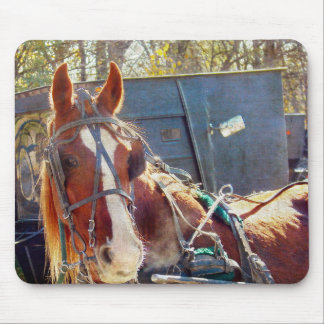 Chilly Morning Amish Horse Mousepads