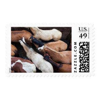 Chiloe Island ferry, horses Postage