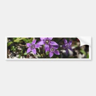 Chiltern gentian (Gentianella germanica) Bumper Sticker