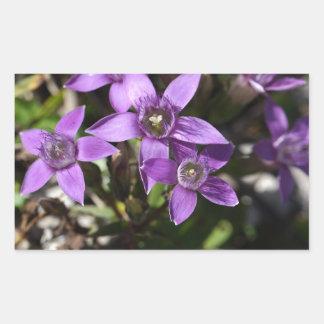Chiltern gentian (Gentianella germanica) Rectangular Sticker