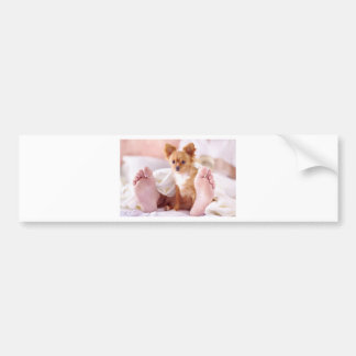 Chimi Chihuahua Guards Master Bumper Sticker