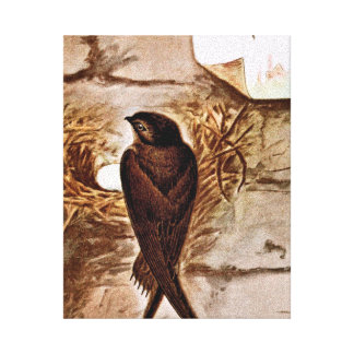Chimney Swift Gallery Wrapped Canvas