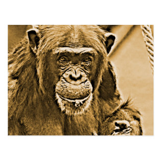 Chimp 216 postcard