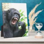 Chimp Baring Teeth Plaque